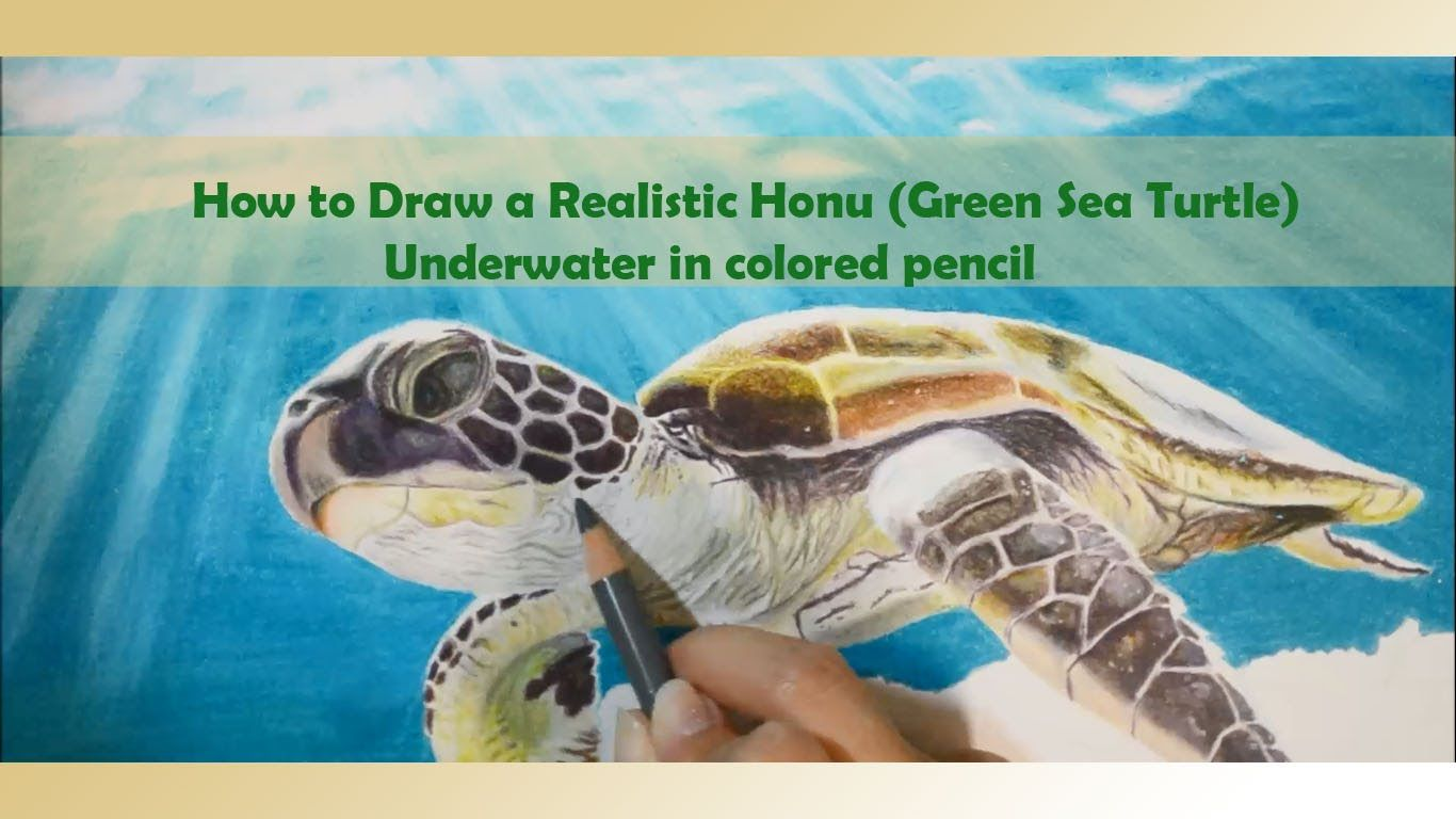 How to Draw a Realistic Honu (Green Sea Turtle) Underwater in Colored Pe...