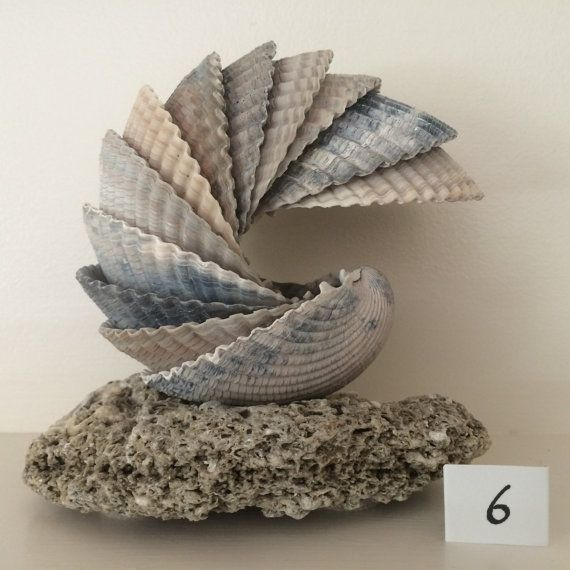 Very large cockle shells, adhered to create a unique sculpture when displayed on the felt-padded sea stone. Arrives in two separate pieces. Designed to be self-balanced when displayed as shown. A variety of other positions are possible. The shells have their natural colors and finish. No bleach, sprays or oils. Shells and stone collected at Edisto Beach, South Carolina, during winter 2013.
