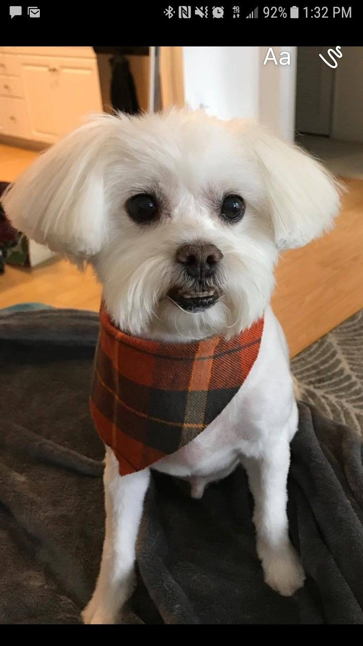 My Husband Groomed This Super Cute Dog At Penny S Pup Wash In