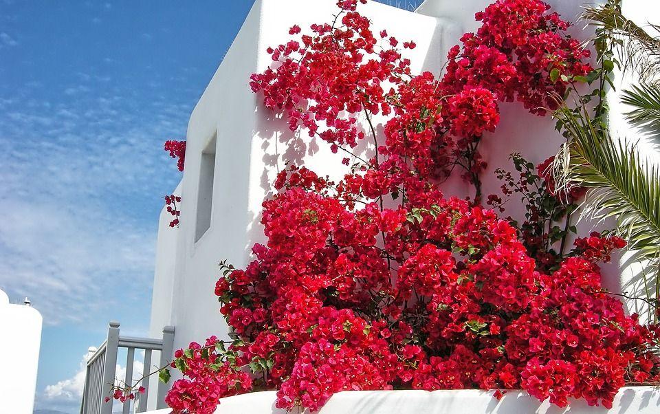 Ilmaisen valokuvan: Mykonos, Kreikka, Kukat, Punainen - Ilmainen kuva Pixabayssa - 631702