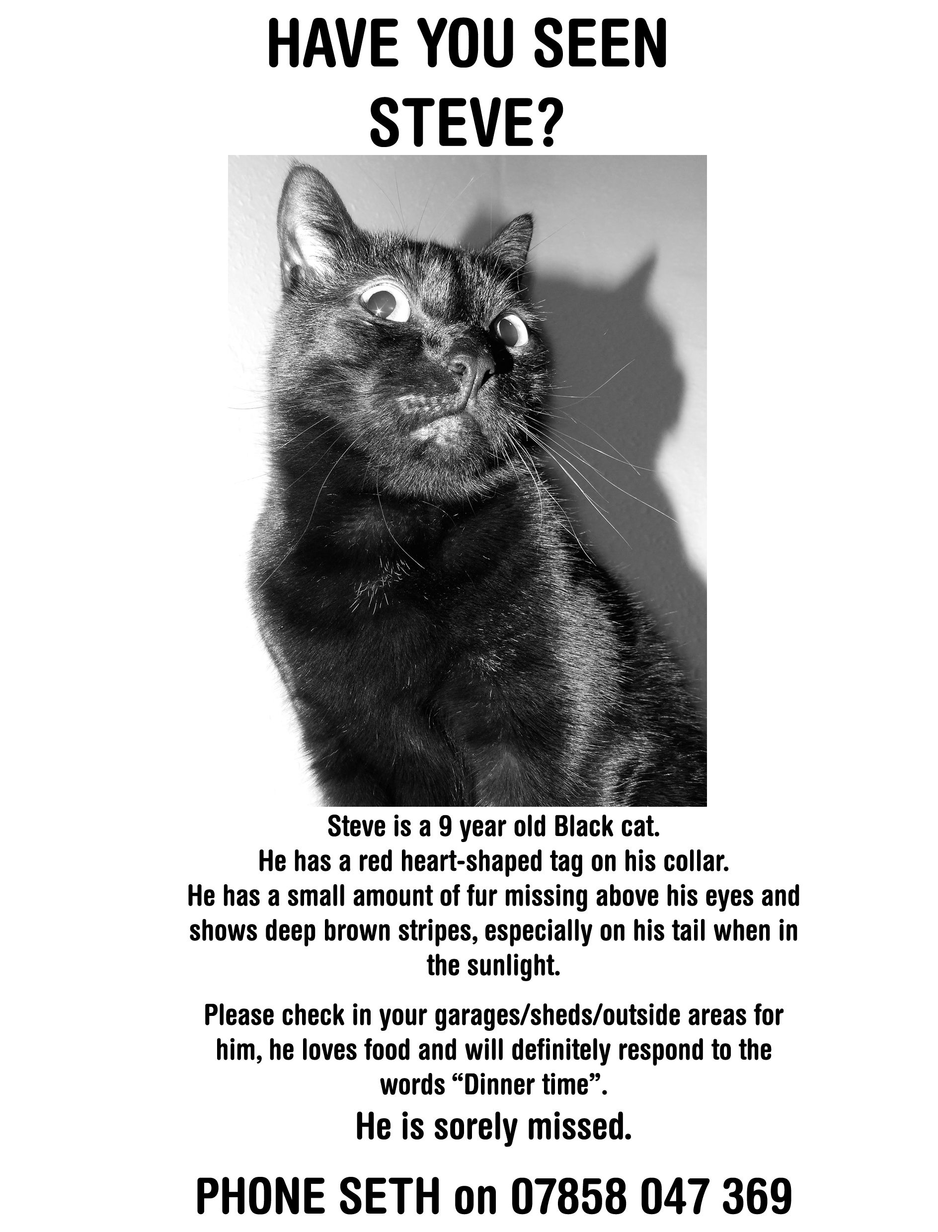 lost cat images Google Search Cats, His eyes, 9 year olds