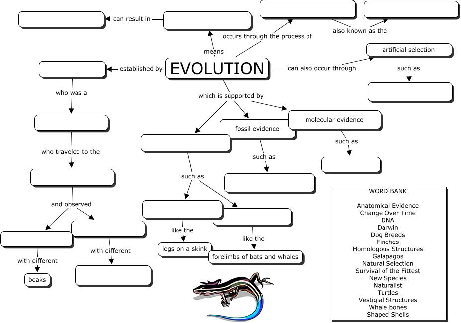 Evolution Concept Map in 2020 Evolution concept map
