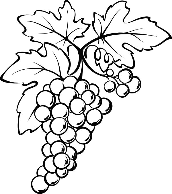Grapes From Spain Coloring Pages Color Luna Grape Drawing Vine Drawing Leaf Coloring Page