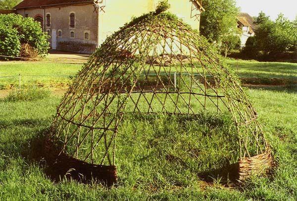 saule tressé - Google zoeken jardin paysager Pinterest