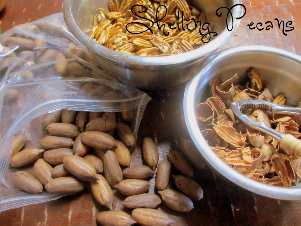 Grandma was always shelling pecans picked from her own trees...