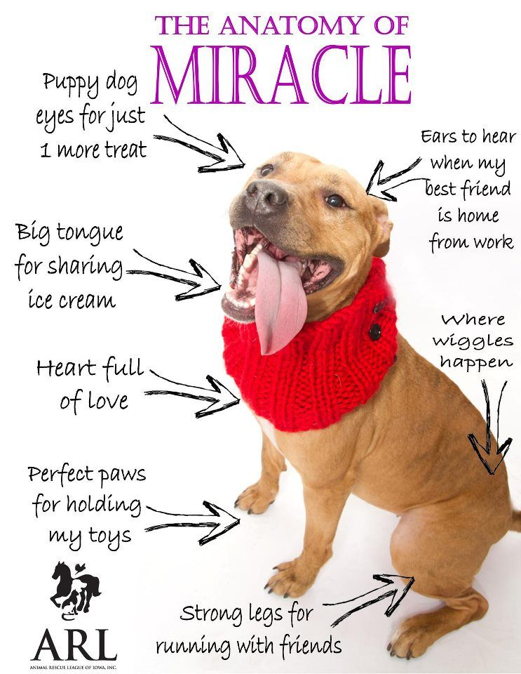 I My Pibbles Doggie Love 3 Pinterest Pit Bull Dog And