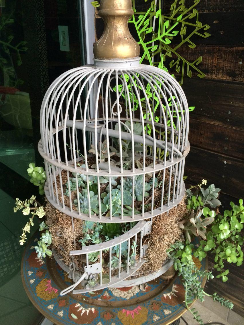 mi jardn de suculentas en una jaula de pjaros antigua
