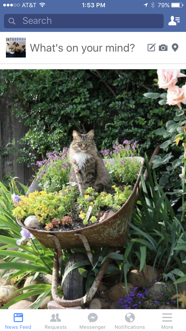 Pin by Wanda Haynie on Gardening and outdoor spaces | Pinterest | Cat