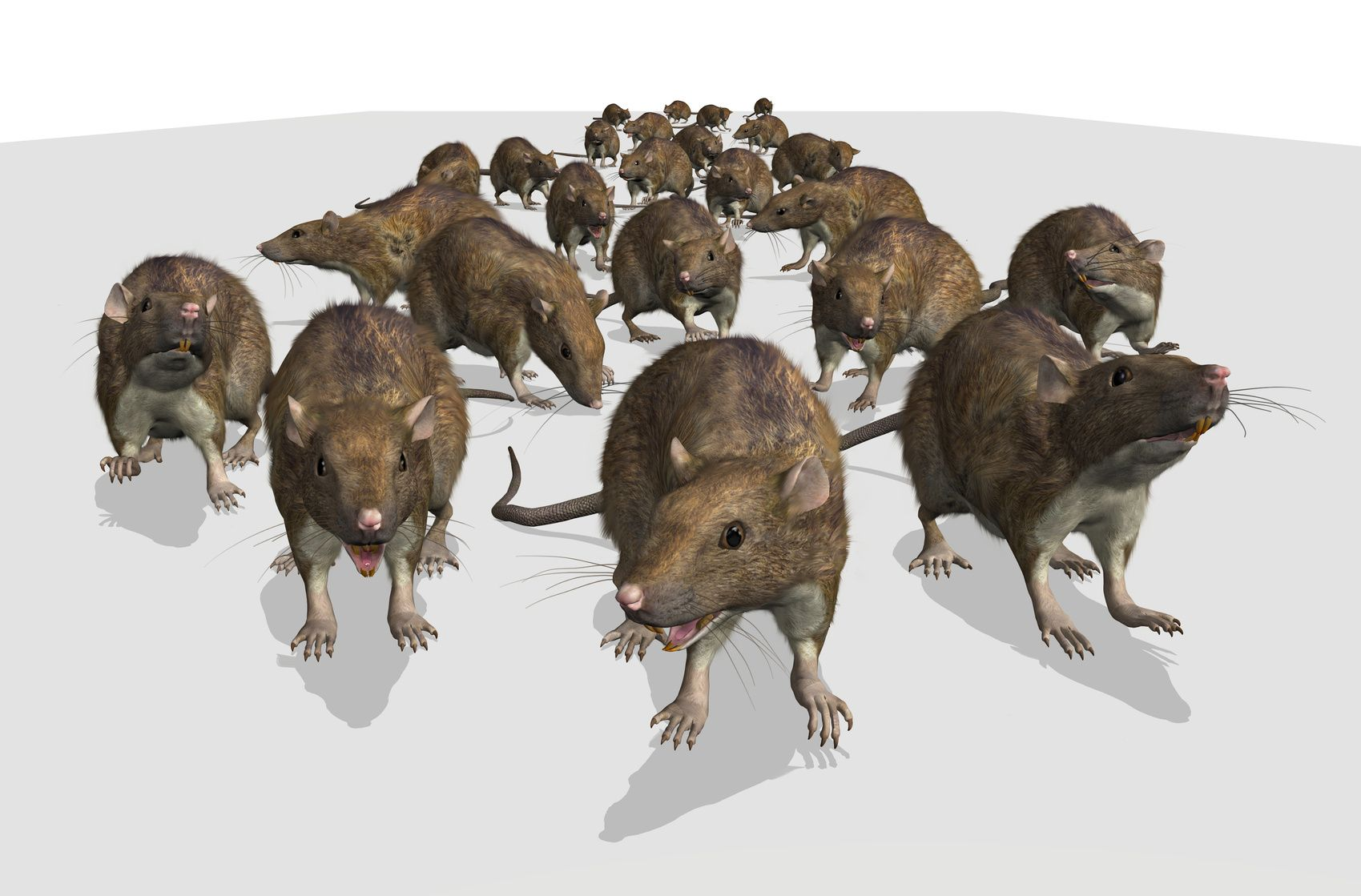Mice infestation in your home now what mice
