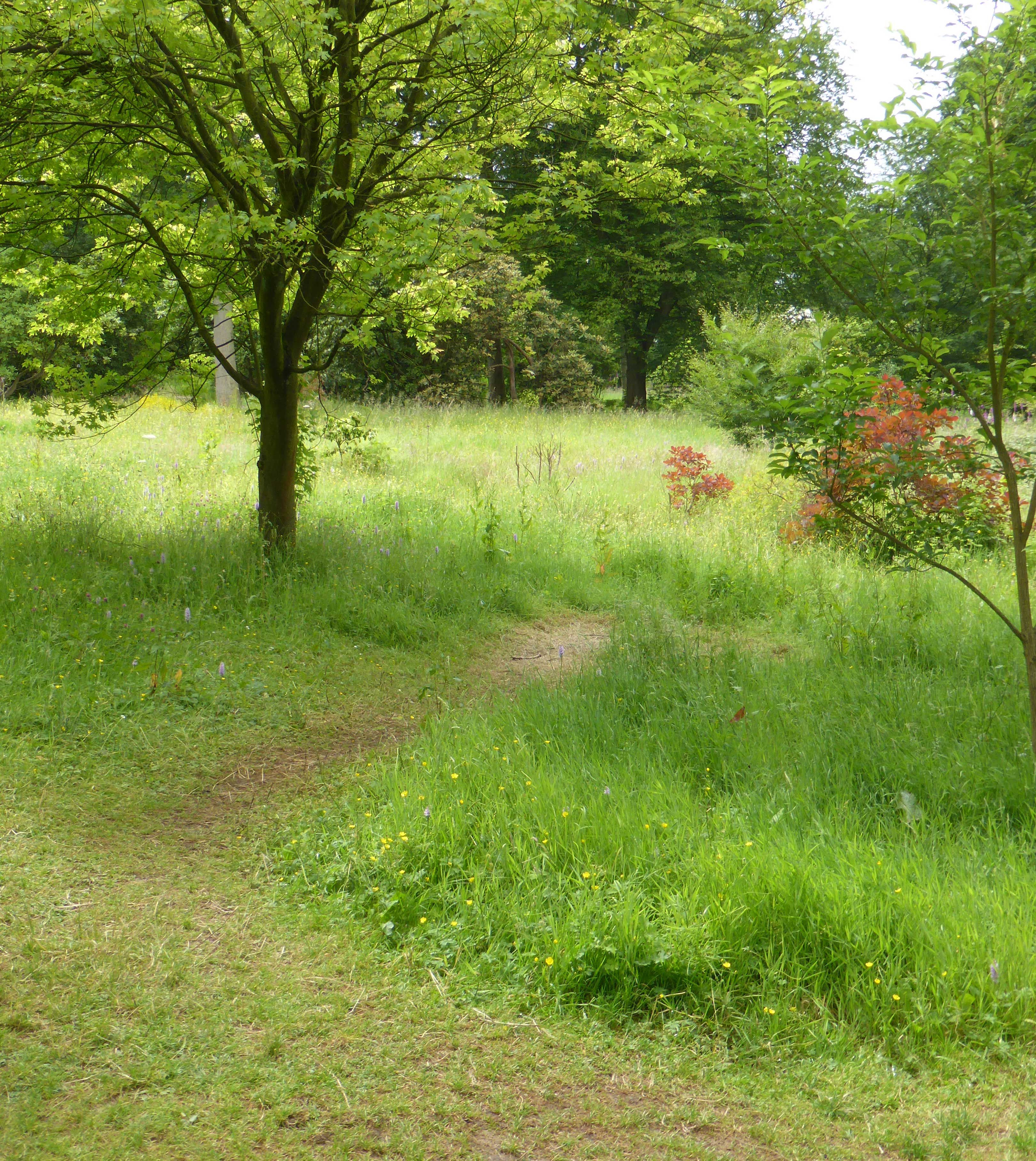 There are large areas of woodland to walk through and enjoy