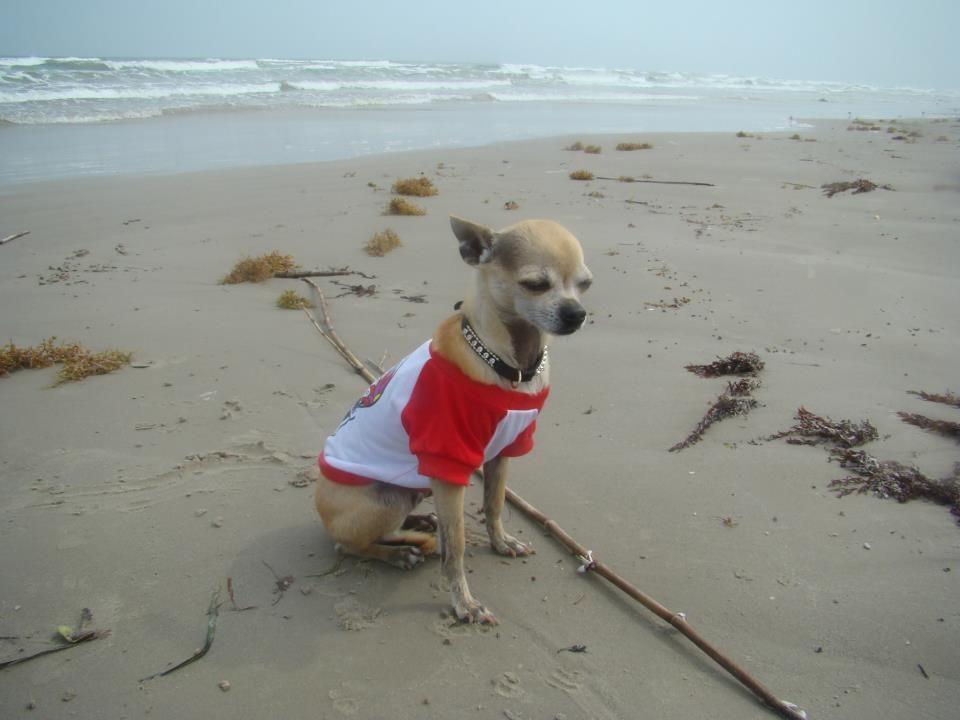 Enjoying the sea breeze