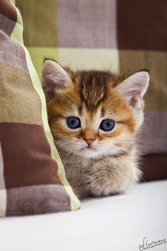 Картинка с маленькими котиками