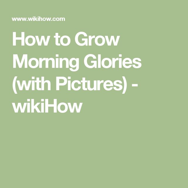 Grow Morning Glories   How to whistle loud, Girls be like ...