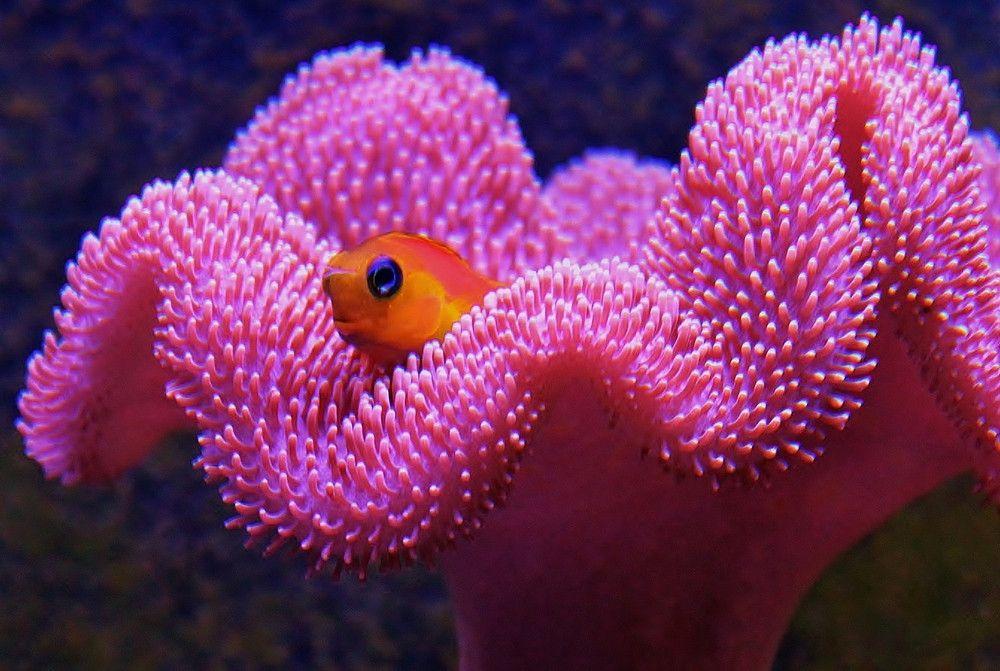 Pin On Reef