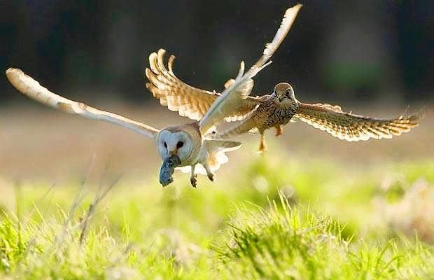 Idea by ~ •SALLY• ~ on ~OWLS~ | Funny birds, Animals