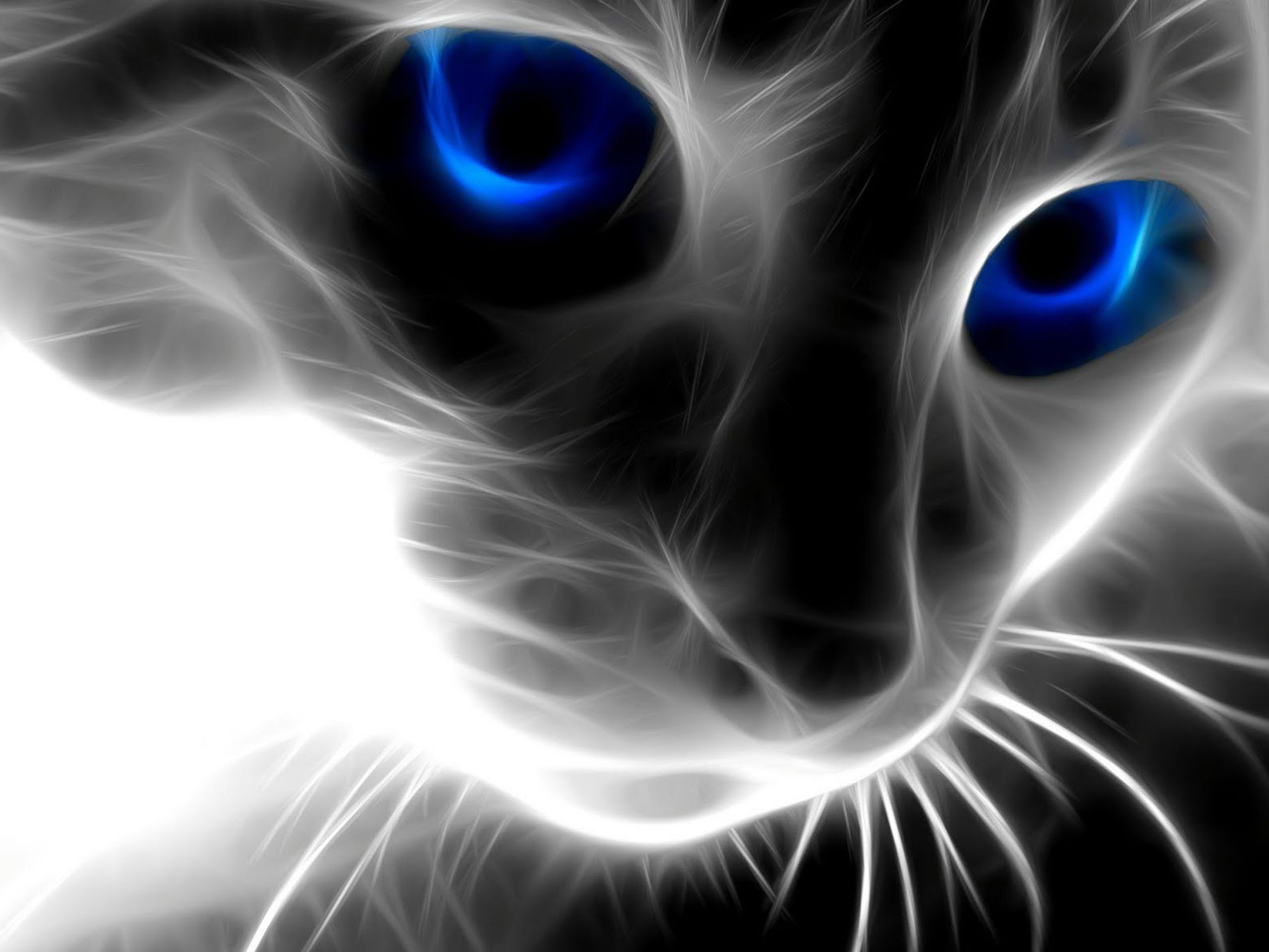 Glowing Cat Cat With Blue Eyes Cat Wallpaper Wild Cats