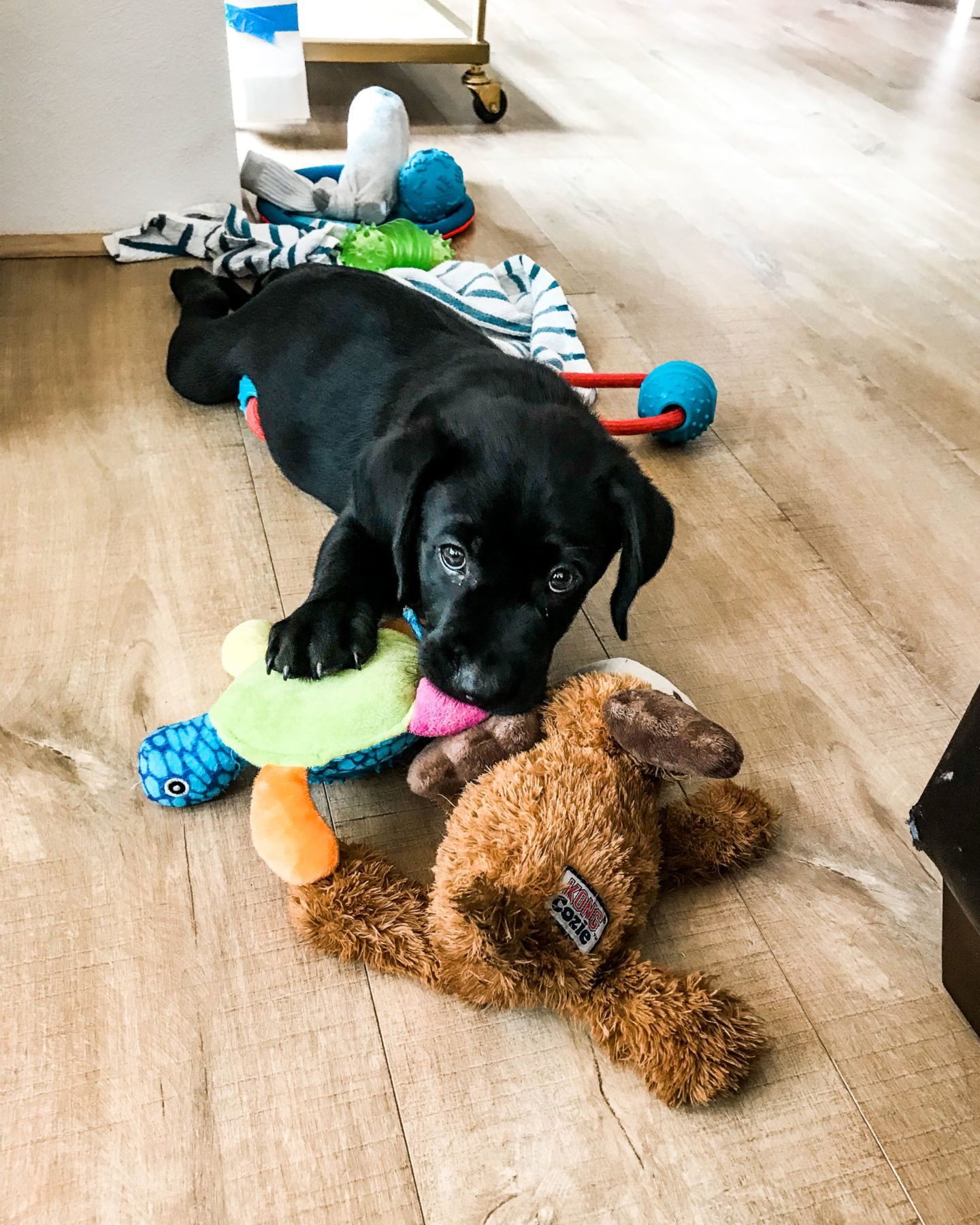 Puppy Toys Buying Guide The Best Labrador Puppy Supplies Puppytoys Dogtoys Labradorretriever Labradorpuppy Pup Puppy Supplies Labrador Puppy Toy Puppies