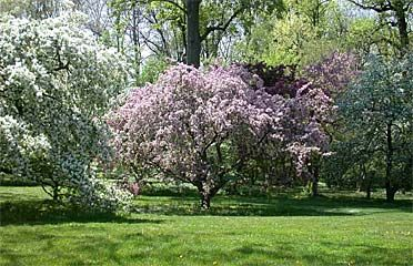 Greater Philadelphia Gardens #parks | Arbre fleuri, Arbre ...