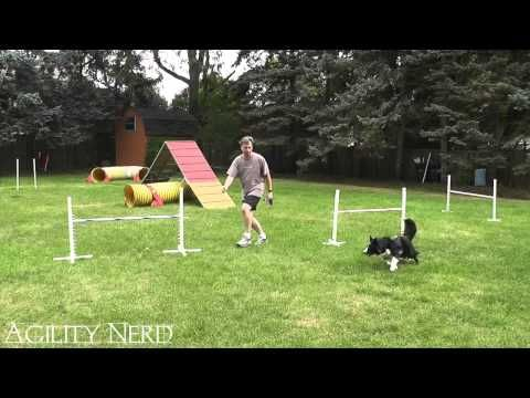Handling Two Jump 360 Serpentines Agility Training For Dogs Dog