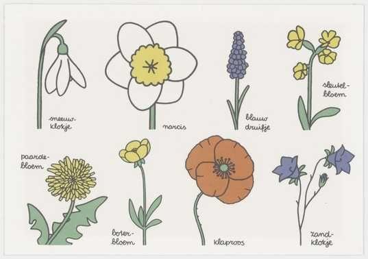 bloemen (zie ook: bloemenboek) | Centraal Museum Utrecht