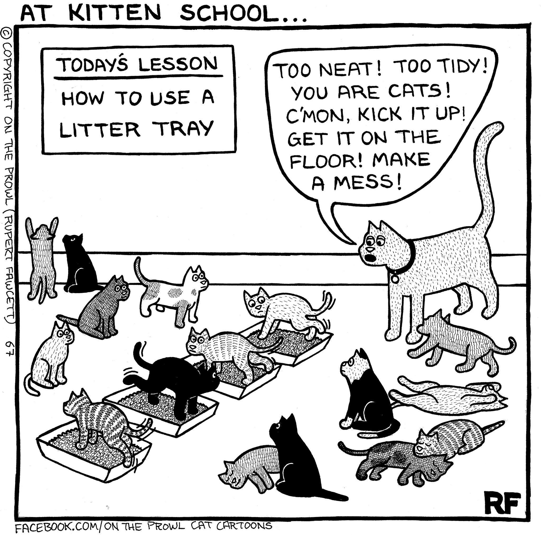 Litter Training Lol