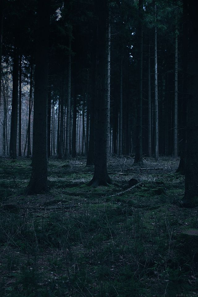 Pin On Beautiful Places Night in woods iphone wallpaper