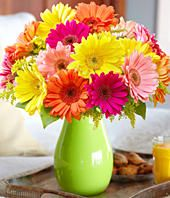 Gerbera Daisy Care Guide Growing Information Tips And Meaning Daisy Bouquet Wedding Gerbera Daisy Bouquet Daisy Wedding