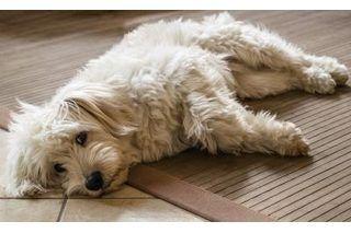 Vinegar Baking Soda For Pet Odors In Carpets