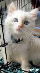 Adopt Pumpkin On Cute Cats Cute Animals Cats Kittens