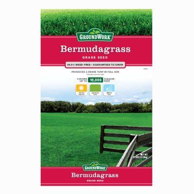 Access Denied Bermuda Grass Bermuda Grass Seed Grass Seed