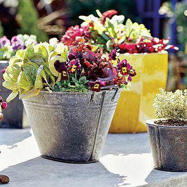 Salad greens & violas in galvanized tin buckets