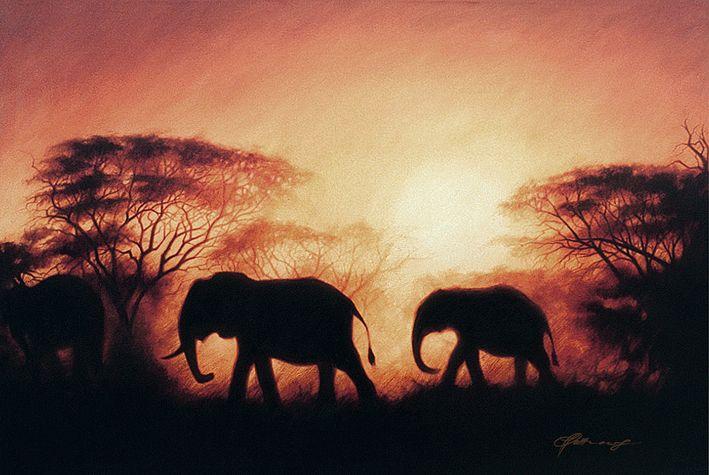 elephants traveling at sunset magnificent elephants
