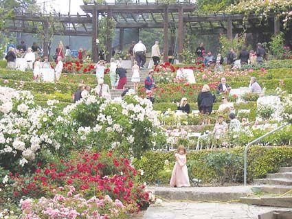 The rose garden North Berkeley Favorite Places Spaces Pinterest