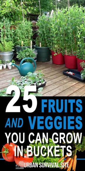 25 Fruits and Veggies You Can Grow in Buckets (Updated & Expanded) is part of Home vegetable garden, Bucket gardening, Container gardening vegetables, Plants, Veg garden, Veggie garden - Not only is bucket gardening a great solution for people with limited space, it has many advantages over traditional gardening