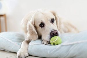 Holistic approach to canine Cancer. Top tips from holistic veterinarians and alternative options.