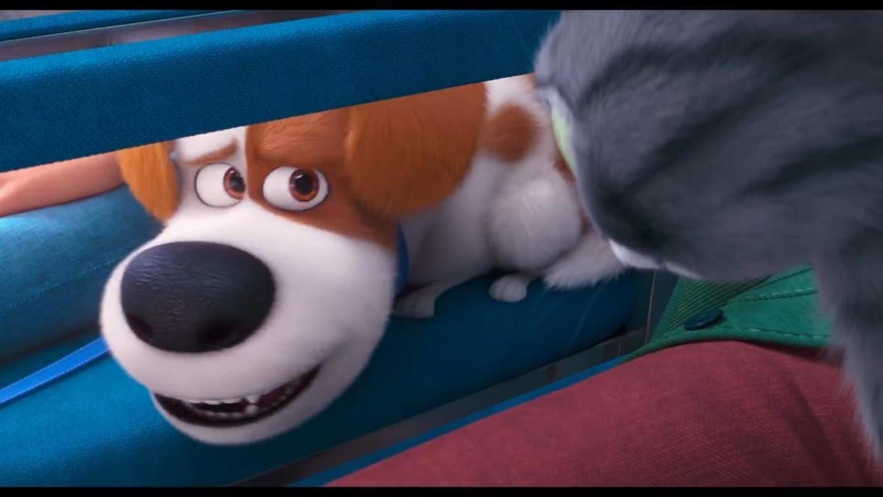 Regarder Film The Secret Life Of Pets 2 Streaming Vf Complet Hd Streaming Pets Secret Life Of Pets Secret Life Pets