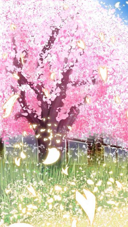 Sam2119931 Sakura Flor De Cerejeira Flores