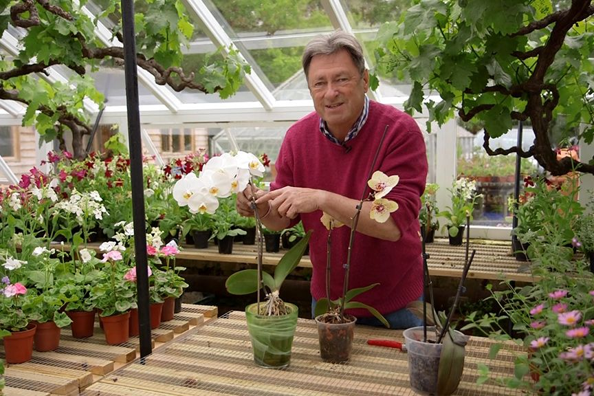 Looking after orchids Moth orchid Orchid and Gardens
