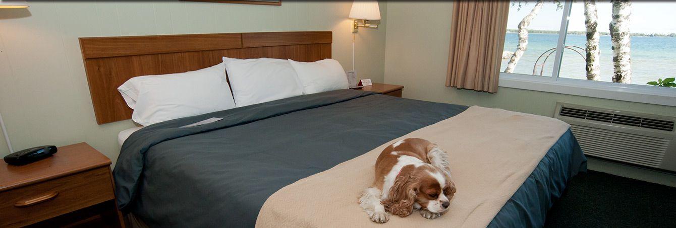 Baileys Harbor Hotel Dog Friendly Lodging Beachfront Inn Door County Wisconsin