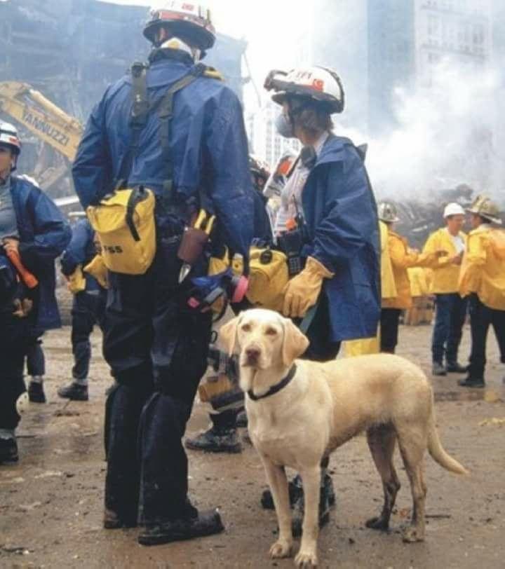 Https Www Facebook Com Neverforget911 Photos A