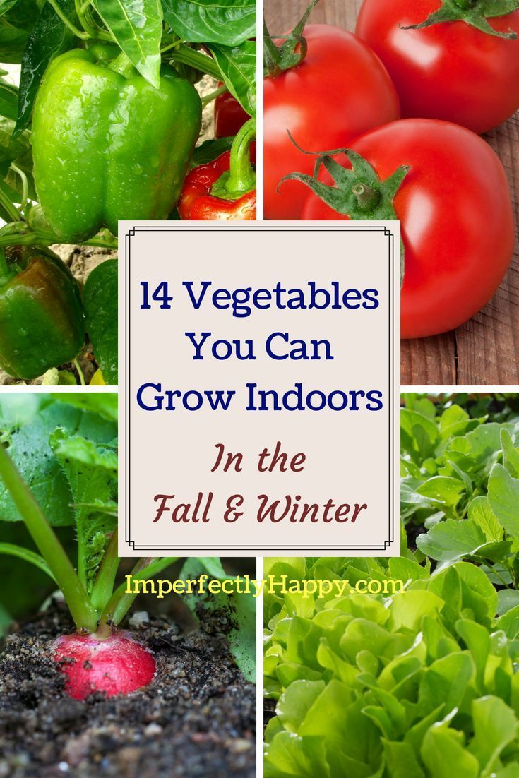 14 Vegetables Vegetables You Can Grow Indoors in the Fall & Winter is part of Winter garden Indoor - 14 Vegetables Vegetables You Can Grow Indoors in the Fall & Winter so you never have to miss out out gardening because of weather or space