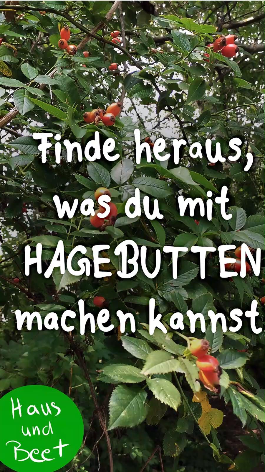 Hagebutte – Die Vitaminbombe der Rosen #vorgartengärten