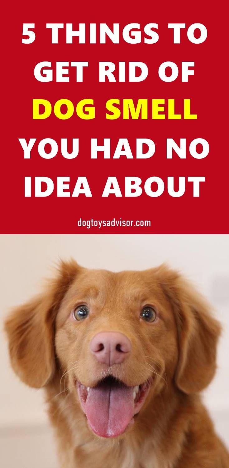 Pin By Lori Freitag On Pets In 2020 Dog Smells Dog Training