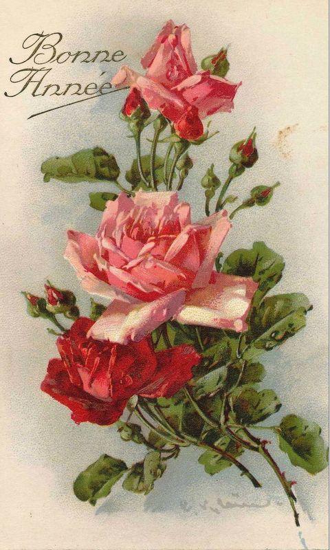 les roses de catharina klein photo de les roses de c klein peintre cartes postales. Black Bedroom Furniture Sets. Home Design Ideas