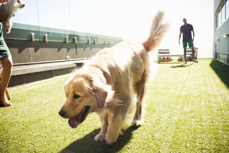 Dog Park On The Roof La S Best Rooftop Park Amenities Hollywood Penthouses Hotel Residences Los Angeles Hollywood Penthouse Penthouse Hotel Luxury Condo