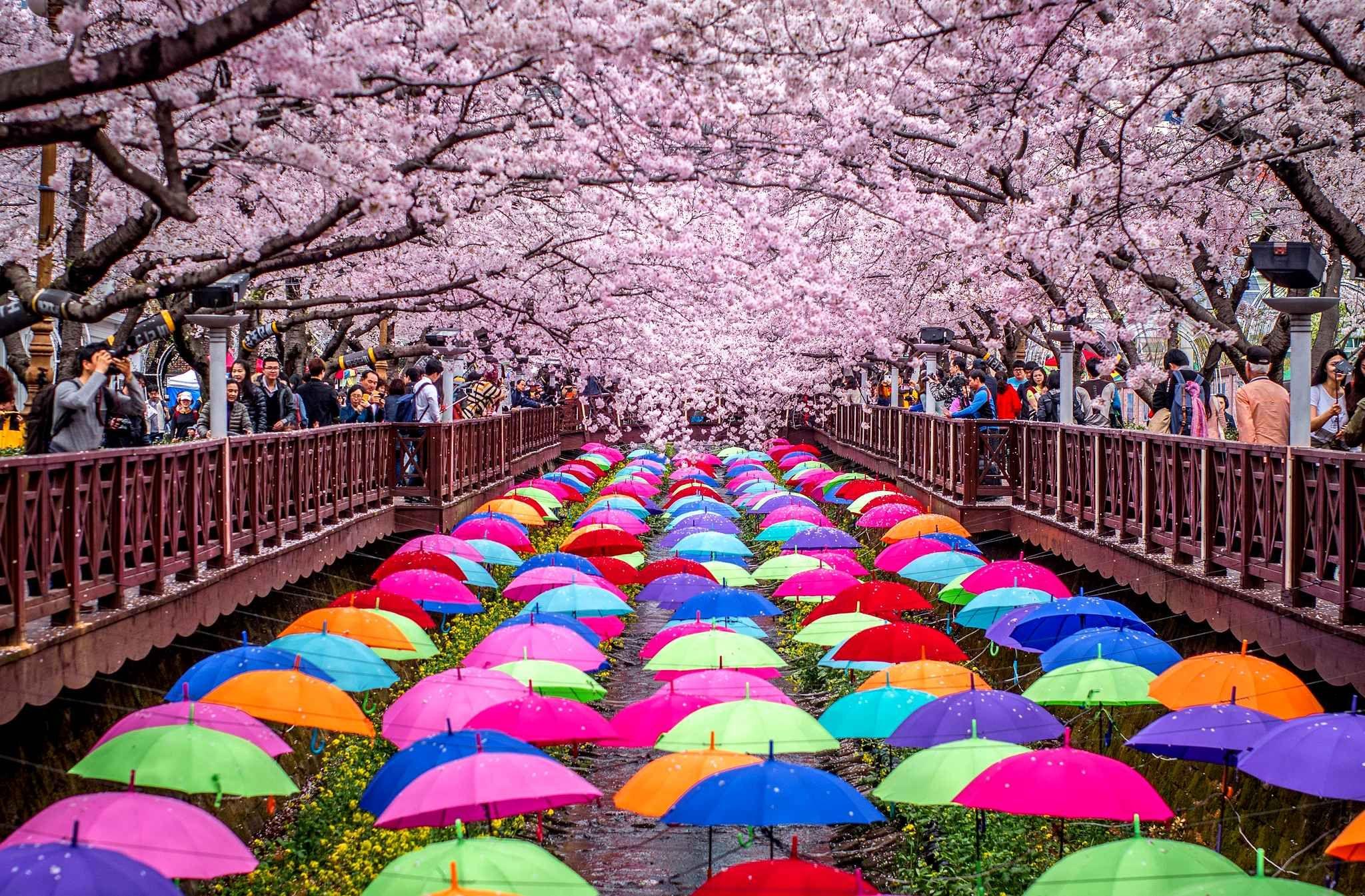 Korean wedding decoration ideas  Des rangées de parapétales  Nature  Pinterest