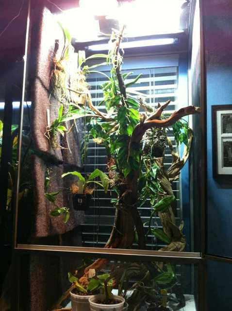 Panther Chameleon Cage Setup Pictures to Pin on Pinterest ...