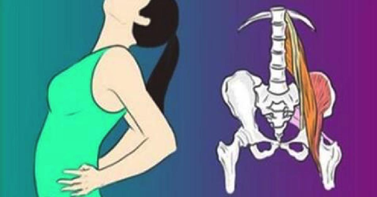 El nervio ciático es un nervio ubicado en a parte posterior del ...
