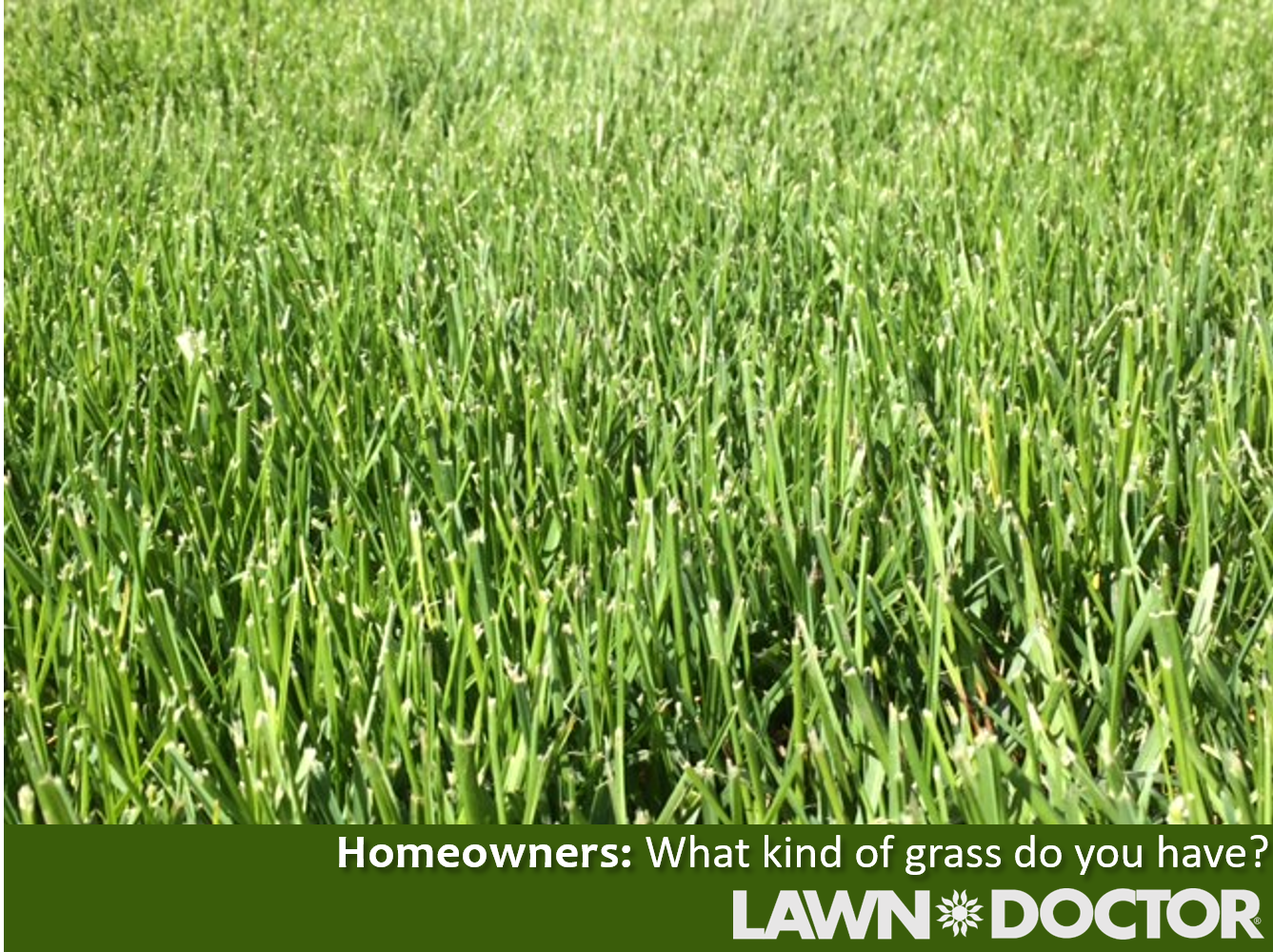 If You Want To Have A Great Lawn You Need To Know What Type Of Grass You Have But How Can You Tell Click The Link To See West Sussex