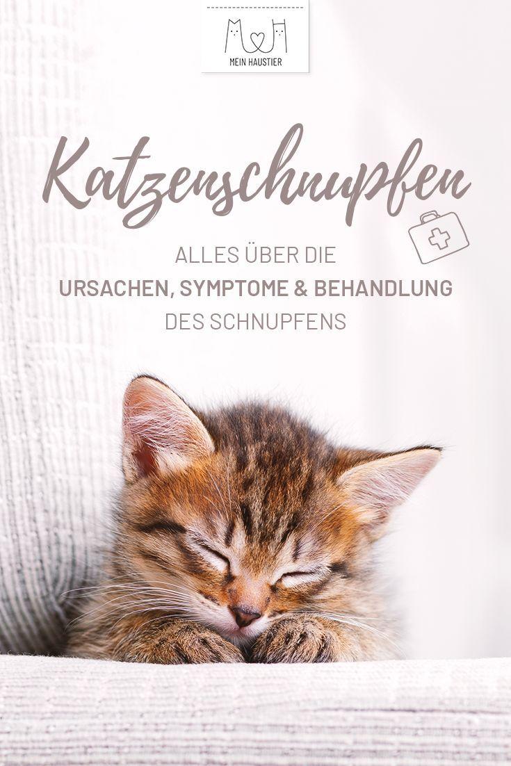 Katzenschnupfen Alles Uber Ursachen Symptome Und Behandlung